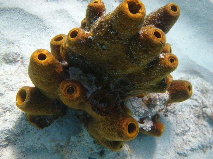 Snorkeling Aruba