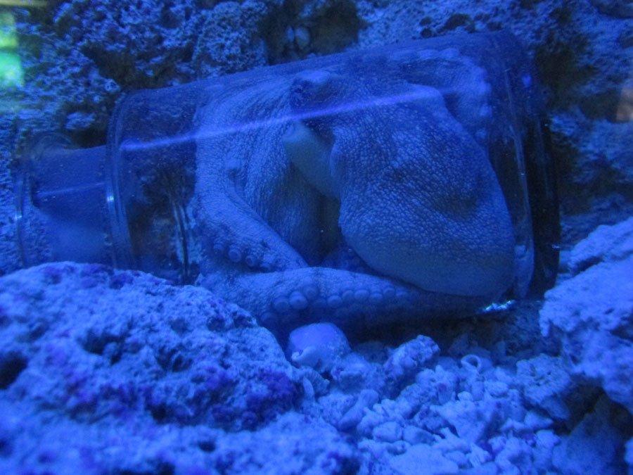 cancun-aquarium