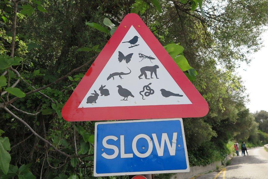 Wildlife sign at Gibraltar rock