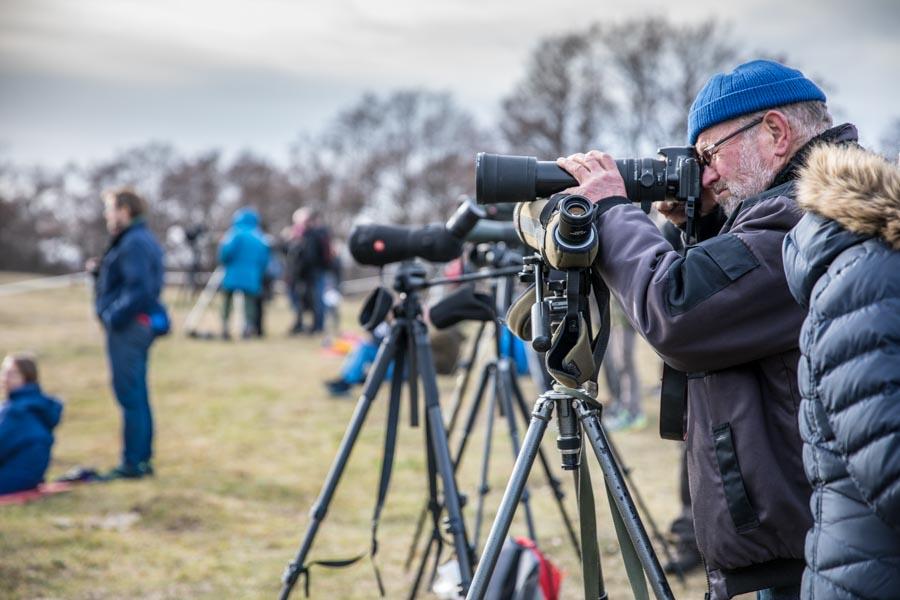 Photographing cranes in Sweden